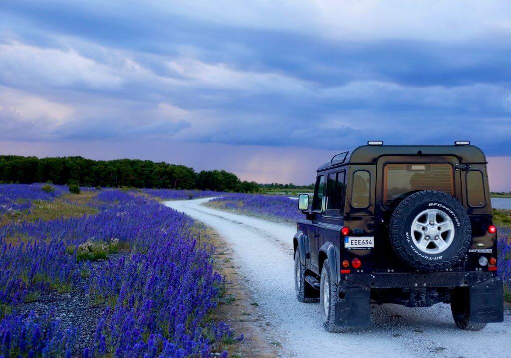 Road trip lavendar field RF